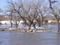 rabbit-creek-flood-2011